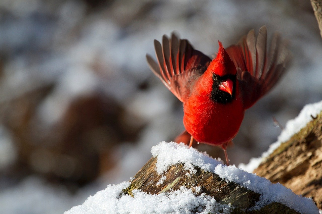 What does a red bird symbolize