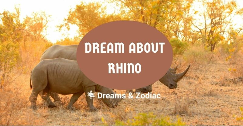 dream about rhino