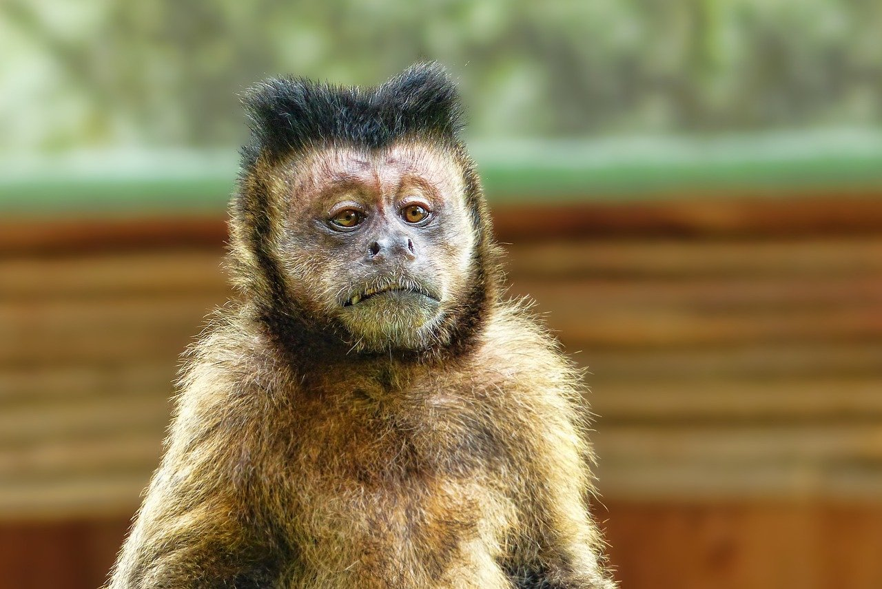 What does a monkey symbolize