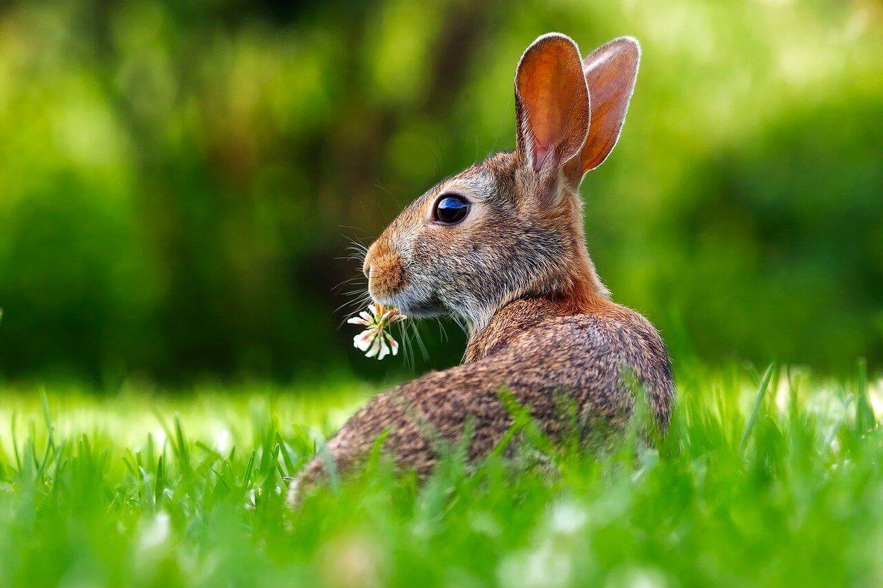 What do rabbits symbolize
