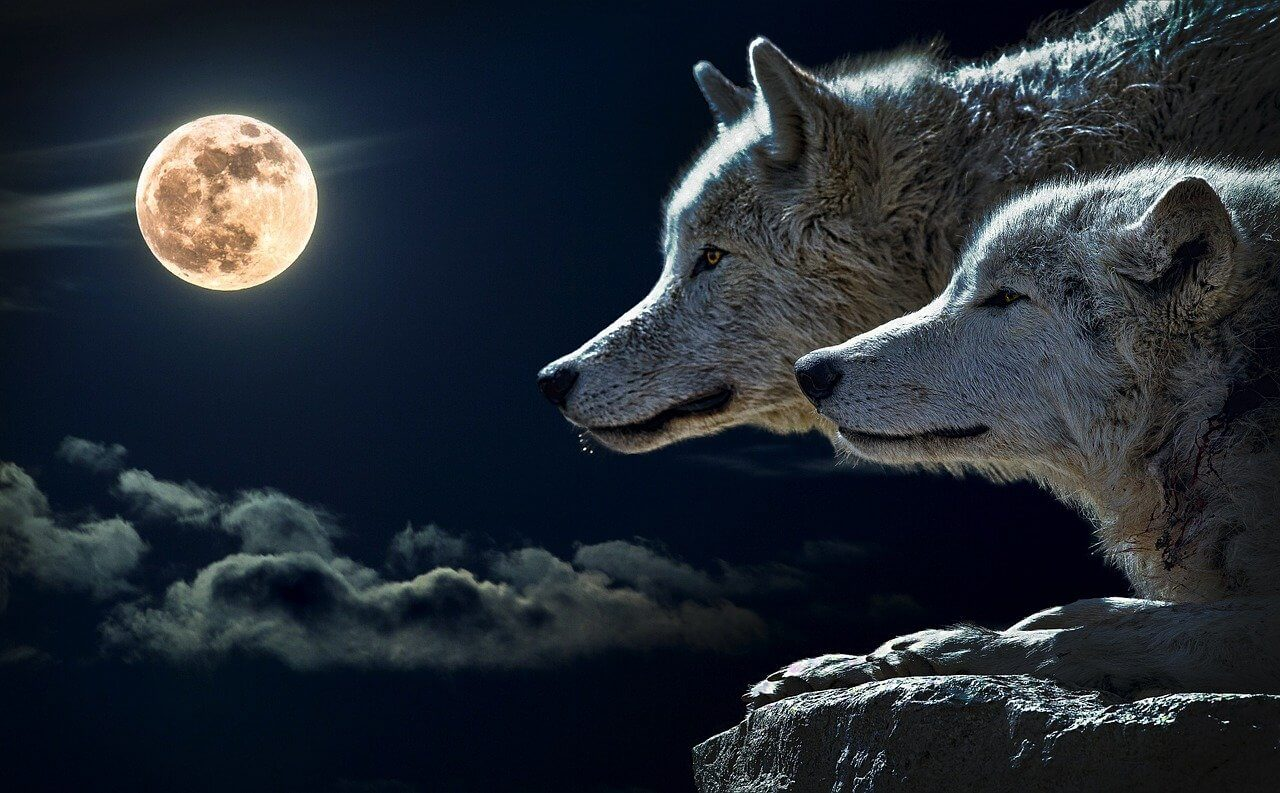 What does a wolf howling at the moon symbolize